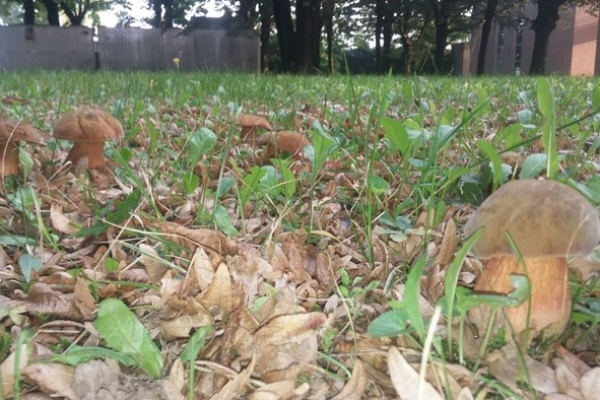 luridus-cimitero-copiaBFF67146-84A3-D7F5-744E-51F6FA0D5643.jpg